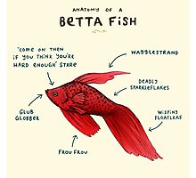 Anatomy of a Betta Fish Photographic Print
