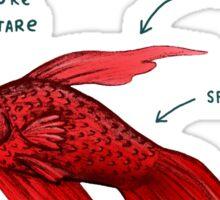 Anatomy of a Betta Fish Sticker