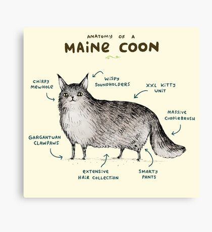 Anatomy of a Maine Coon Canvas Print