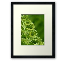 Fern Leaf Detail Framed Print