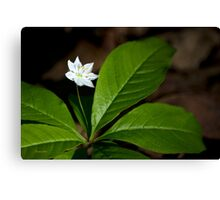 Delicate White Starflower Art Canvas Print