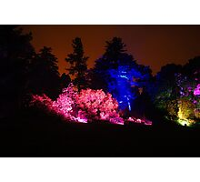 Colour Wheel (2) - Botanic Lights 2015 Photographic Print
