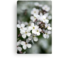 White Wildflowers Canvas Print