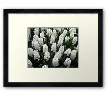 Heavenly Hyacinths - Keukenhof Gardens Framed Print