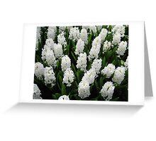 Heavenly Hyacinths - Keukenhof Gardens Greeting Card