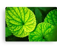 Green Leaf Abstract Art Canvas Print