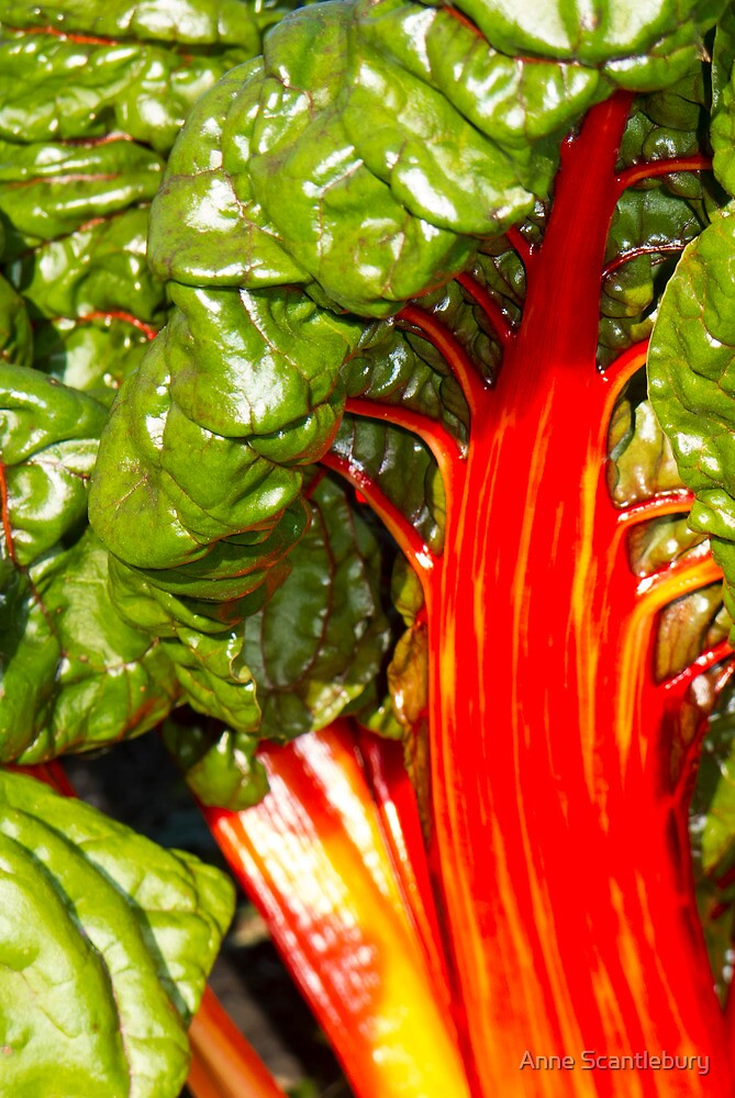 red stems by Anne Scantlebury