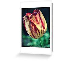 Yellow Red Tulip Perennial Greeting Card