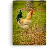 El Gallo the Rooster Canvas Print