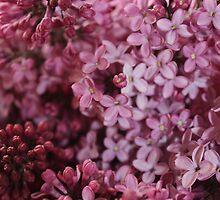 Spring Flowers by Rebecca Brann
