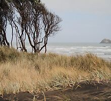 Muriwai beach by Anne Scantlebury