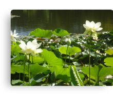 Happy Lotus together at waters edge Canvas Print