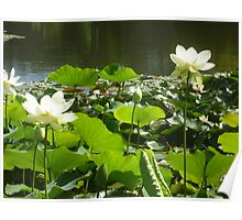 Happy Lotus together at waters edge Poster
