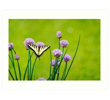 Sugar and Spice Butterfly Art Art Print