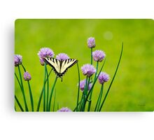 Sugar and Spice Butterfly Art Canvas Print