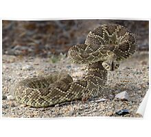 Mohave Green Diamondback Rattlesnake Ready and Willing Poster
