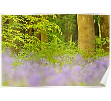 Micheldever Wood Poster