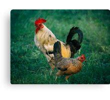 El Gallo y La Gallina Rooster and Hen Canvas Print