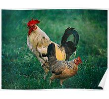 El Gallo y La Gallina Rooster and Hen Poster