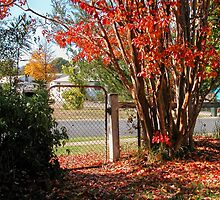 Autumn Welcome,Tumut, Australia. by kaysharp
