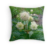 Common Buttonbush - Cephalanthus occidentalis Throw Pillow
