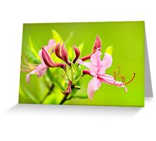 Pink Honeysuckle Flowers Greeting Card