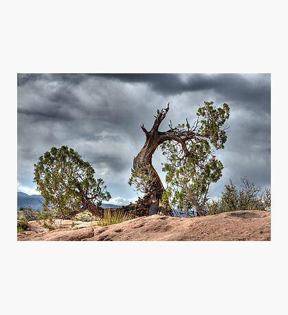 Trees Survival Mode Photographic Print