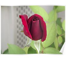 Red Rose for Cheryl Poster