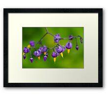 Macro photo of purple flowers Framed Print