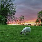 Country sunset - Braunston........! by Roy  Massicks