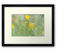 Photo of yellow flowers Framed Print