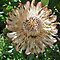 Protea Group