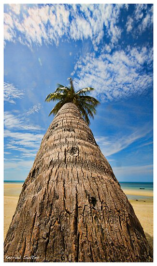 Palm tree in Koh Samui by Kerrod Sulter