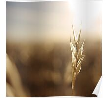 Grass Field Poster