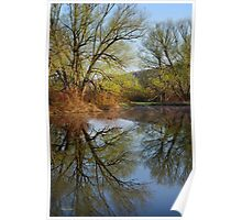 Tree Reflection Landscape Poster