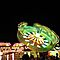 Lights At The Carnival!!!!!