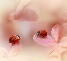 Ladybirds on pink hydrangea by Ellen van Deelen