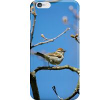 Chipping Sparrow in a Tree iPhone Case/Skin