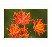 Red Maple Leaves Abstract Art Print