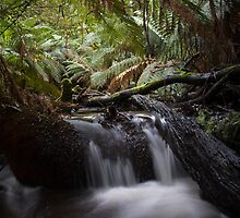 Wirra Willa Toolangi. by Daniel Berends
