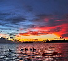 Pelicans paddling in the sunset by Ian Berry