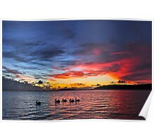 Pelicans paddling in the sunset Poster