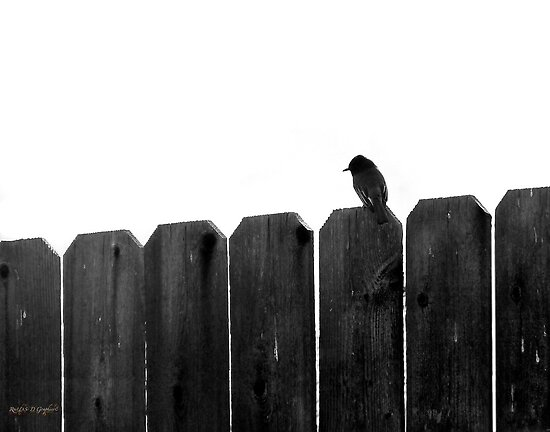 Little Bird (an image & a poem) by Rhonda Strickland