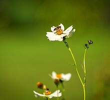 Busy Bee by mlphoto