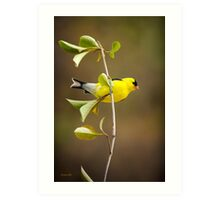 American Goldfinch Art Painting Art Print