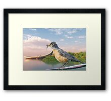 American Robin and a Mouthful Framed Print
