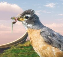 American Robin and a Mouthful Sticker
