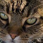 Cats Eye by reney03