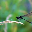 This Damsel Is Not In Distress by aprilann