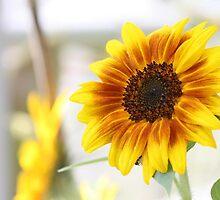 Sunflower  by WDaRos714